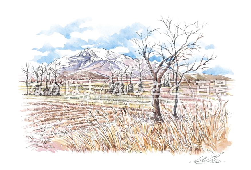 冬の伊吹山とハンノ木のある風景